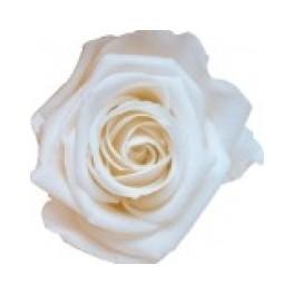 Mini Rosa Amorosa 35cm Blanco
