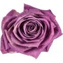 Cabeza Rosa Lila 6ud.